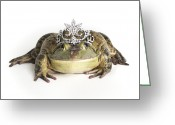 Tiara Greeting Cards - Frog Wearing Tiara, Close-up Greeting Card by American Images Inc