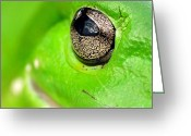 Moist Greeting Cards - Frogs Eye Greeting Card by Kaye Menner