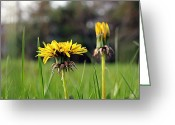 Dandelion Pyrography Greeting Cards - From an ants point of view Greeting Card by Gene Gorham