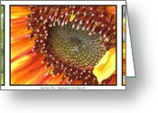 Fashion Photo Prints Greeting Cards - From Bud to Bloom - Sunflower Greeting Card by J McCombie