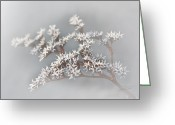 Delicate Bloom Greeting Cards - From the Mist Greeting Card by Barbara  White