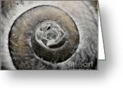 Shell Texture Greeting Cards - From the sea Greeting Card by Kristin Kreet