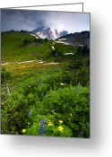 Lupine Greeting Cards - From the Top Greeting Card by Mike  Dawson