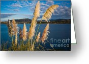 Oceania Greeting Cards - Fronds Greeting Card by John Buxton