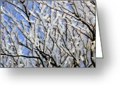 Tree-covered Greeting Cards - Frost-covered Beech Tree Greeting Card by Colin Varndell
