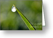 Green Pasture Greeting Cards - Frost on Blade of Grass Greeting Card by Thomas R Fletcher