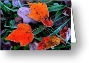 Maple Leaves Greeting Cards - Frost on Sugar Maple Leaves Greeting Card by Thomas R Fletcher