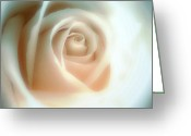 Frizzell Greeting Cards - Frosted Glass Rose Greeting Card by Michelle Frizzell-Thompson