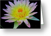 Water Lilly Greeting Cards - Frosted Lily Greeting Card by Steve McKinzie