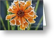 Freeze Greeting Cards - Frosty flower Greeting Card by Elena Elisseeva