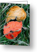 Covering Greeting Cards - Frosty leaves Greeting Card by Elena Elisseeva