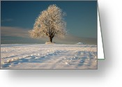 Oak Tree Greeting Cards - Frosty Oak Tree Greeting Card by by Sigurd Rage