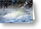 White Wolf Greeting Cards - Frozen Grass Greeting Card by Svetlana Sewell