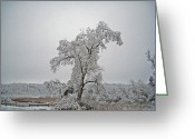 Plant Greeting Cards - Frozen Tree Greeting Card by Aimee L Maher