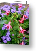 Pink And Purple Greeting Cards - Fuchsia Standout Greeting Card by Carol Groenen