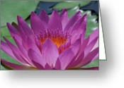 Lily Pad Greeting Cards Greeting Cards - Fuchsia Water Lily Greeting Card by Chad and Stacey Hall