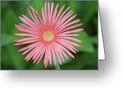 Stamen Greeting Cards - Full Bloom Greeting Card by Daniela Duncan