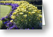 Flowery Greeting Cards - Full Bloom Greeting Card by Peter Chilelli