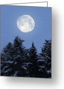 Tree-covered Greeting Cards - Full Moon Greeting Card by Detlev Van Ravenswaay