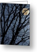 Spooky Moon Greeting Cards - Full Moon in Trees Greeting Card by Randy Steele