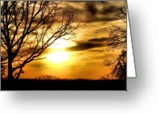 Lincoln Field Greeting Cards - Full of Beauty Greeting Card by Karen M Scovill