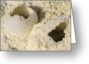 Fumarole Greeting Cards - Fumarole Deposits In The Dallol Greeting Card by Richard Roscoe