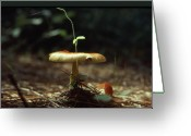 Other World Greeting Cards - Fungus 3 Greeting Card by John Foote