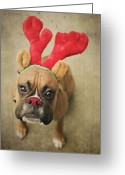 Wayne Greeting Cards - Funny Boxer Puppy Greeting Card by Jody Trappe Photography