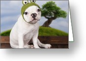 Camera Greeting Cards - Funny French Bulldog Puppy Greeting Card by Maika 777