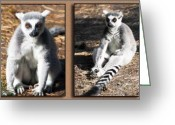 Primates Greeting Cards - Funny Lemurs Greeting Card by Svetlana Sewell