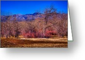 Flood Plain Greeting Cards - Furrowed Field at South Platte Park Greeting Card by David Patterson