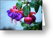 Plant Greeting Cards - Fuschia  Greeting Card by Kimberly Gonzales