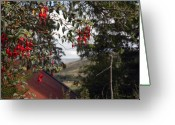 Shelter Prints Greeting Cards Greeting Cards - Fuschia Greeting Card by Paul  Mealey