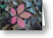 Fushia Greeting Cards - Fushia Leaf 2 Greeting Card by Douglas Barnett
