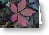 Fushia Greeting Cards - Fushia Leaf Greeting Card by Douglas Barnett