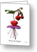 Fushia Greeting Cards - Fushia swanley Gem Greeting Card by Archie Young