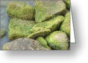 Suburbs Greeting Cards - Fuzzy Rocky Shoreline Greeting Card by Deborah Smolinske