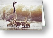 Wild Goose Greeting Cards - Gaggle Greeting Card by Photogodfrey