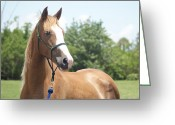 Gaited  Horse Greeting Cards - Gaited Sorrel Greeting Card by Lynda Dawson-Youngclaus