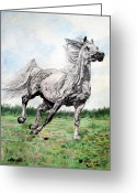 Melita Safran Greeting Cards - Galloping arab horse Greeting Card by Melita Safran