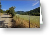 Southern Oregon Photo Greeting Cards - Galls Creek Road in Southern Oregon Greeting Card by Mick Anderson