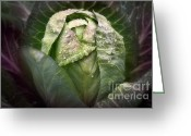 Cole Photo Greeting Cards - Garden Cabbage Greeting Card by Susan Isakson
