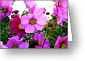 Northwest Flowers Greeting Cards - Garden Cosmos Greeting Card by Cathie Tyler