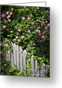 Wooden Home Greeting Cards - Garden fence with roses Greeting Card by Elena Elisseeva