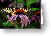 Cone Flower Greeting Cards - Garden Greetings Greeting Card by Lois Bryan