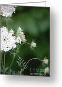 First Star Art By Jammer Greeting Cards - Garden Lace Group Greeting Card by First Star Art