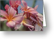 Botanical Greeting Cards Prints Greeting Cards - Garden of Dreams Greeting Card by Sharon Mau