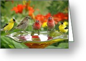 House Finch Greeting Cards - Garden Party Greeting Card by Bill Pevlor