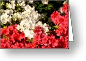 Colorful Photography Greeting Cards - Garden Party Greeting Card by Karen M Scovill