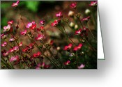 Tiny Flowers Greeting Cards - Garden Thoughts Greeting Card by Bonnie Bruno